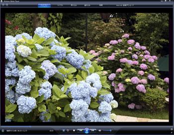 あじさい庭園ビデオ