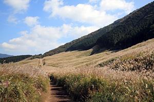 箱根仙石原ススキ草原