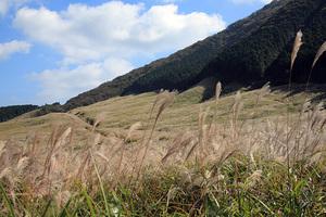 箱根・仙石原ススキ草原2008年10月20日撮影