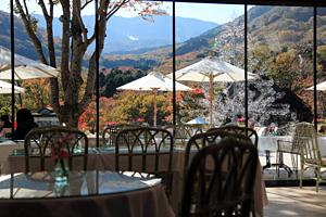 カフェ・レストランの紅葉