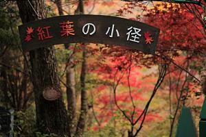 箱根ガラスの森 紅葉の小径