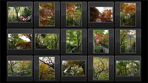 箱根ガラスの森 紅葉状況 2010年11月7日撮影
