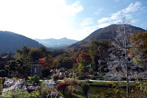 箱根ガラスの森 紅葉状況 2010年11月8日撮影