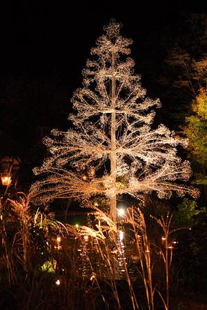 クリスタル・ガラスのクリスマスツリー『アベーテ』完成