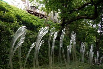 紫陽花の滝の「アナベル」