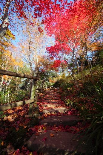 2012年11月20日撮影 箱根ガラスの森美術館 紅葉状況