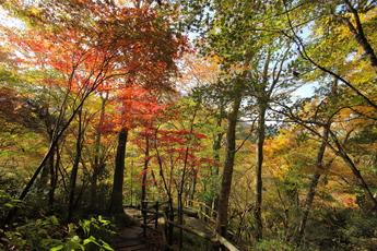 2013年11月8日 箱根ガラスの森美術館 紅葉記録
