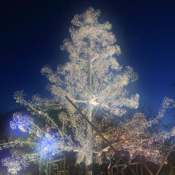 クリスタル・ガラスのクリスマスツリー 修復中