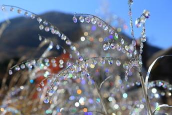 クリスタル・ガラスのススキ