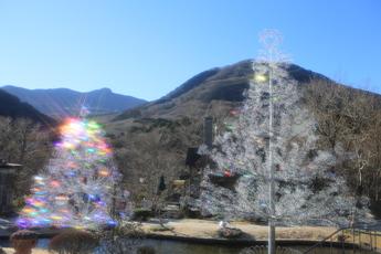 """クリスタルガラスの樹""""アベーテ"""""""