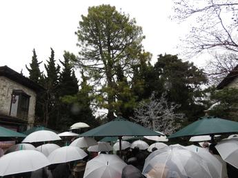 大王松感謝祭