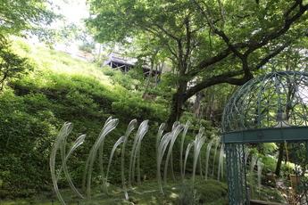 紫陽花の滝のアナベル