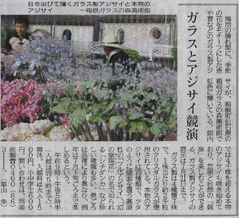 神奈川新聞:クリスタル・ガラスのアジサイ