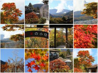 2015年11月5日 箱根ガラスの森美術館 紅葉状況