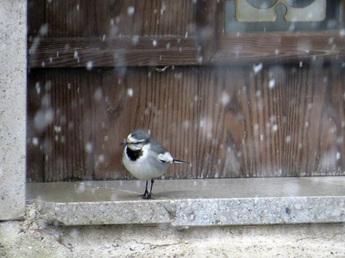 箱根ガラスの森美術館−雪景色 (22).JPG