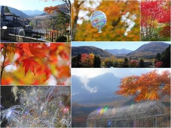 2014年撮影 箱根ガラスの森美術館の紅葉