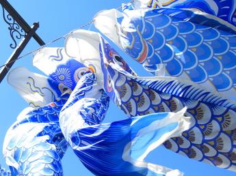 箱根宮城野『青い鯉のぼりプロジェクト』