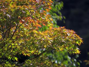 2013年10月11日撮影 箱根ガラスの森美術館 紅葉状況