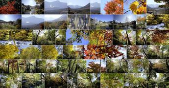 2013年11月5日 箱根ガラスの森美術館 紅葉記録